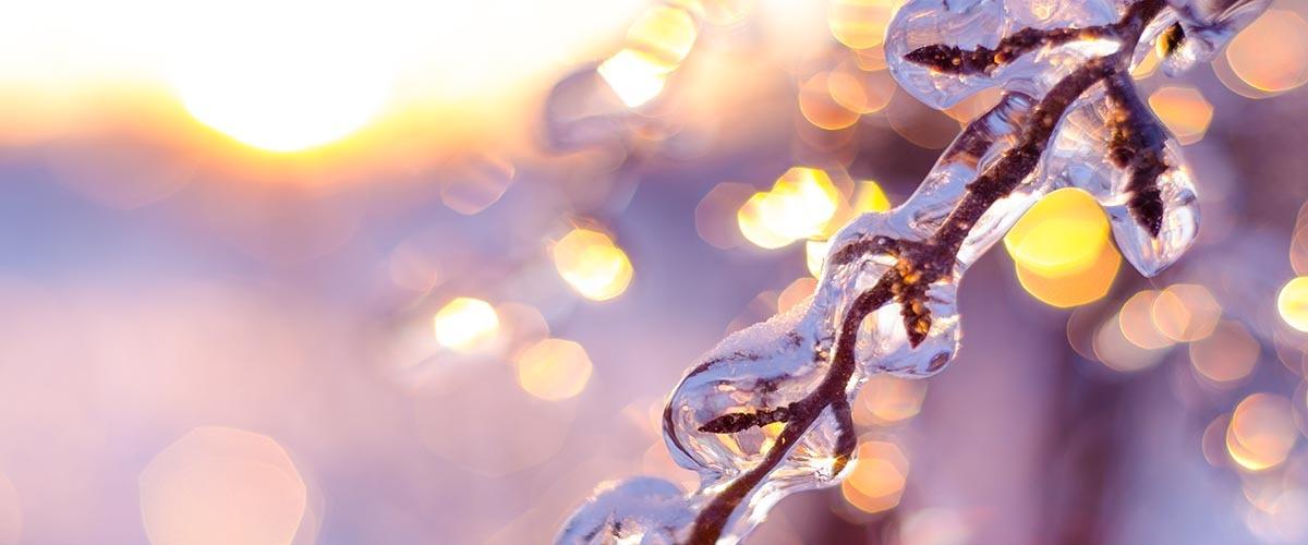 christmas at bowood